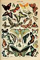Adolphe Millot papillons-pour tous.jpg