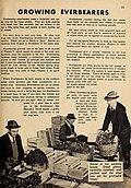Allen's 1949 book of berries (1949) (17328252874).jpg