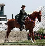 American Saddlebred8.jpg