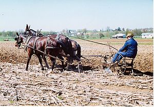 Holmes County, Ohio - Amish farmer plowing fields with horses