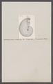 Ammonites pictus costatus - - Print - Iconographia Zoologica - Special Collections University of Amsterdam - UBAINV0274 091 01 0071.tif
