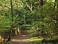 Ancient woodland at Low Frith - geograph.org.uk - 267453.jpg
