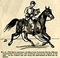 Animal Mechanism – Paces of the horse (1874).jpg