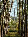 Ankarada ağaçlar.JPG