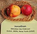 Apfel 086 Jonathan (fcm).jpg