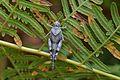 Araignées, insectes et fleurs de la forêt de Moulière (Le Gâchet de Villiers) (29052416831).jpg