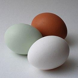Links het Araucana-ei. Rechts het bruine en witte ei.