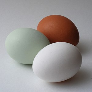 Araucana - An Araucana egg (left) with white and brown eggs for comparison.