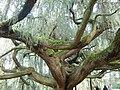 Arboretum (3) - panoramio.jpg