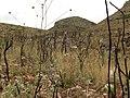 Arbustos quemados en la montaña - panoramio.jpg