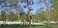 Arlington Cemetery-2.jpg