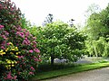 Armadale Castle Gardens in spring - geograph.org.uk - 1318804.jpg