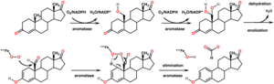 Aromatase - Image: Aromatase mechanism