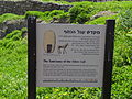 Ashkelon - The Sanctuary of the Silver Calf (1).JPG