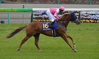 Asia Express (horse) American-bred Thoroughbred racehorse