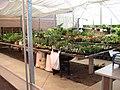 Associação de Floricultores da Rota Romântica 002.JPG