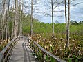 Audubon Society Corkscrew Swamp Sanctuary.jpg