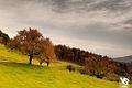 Autumn (5131890650).jpg