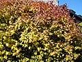 Autumn Blaze (5168974758).jpg