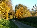 Autumn Lane - geograph.org.uk - 280791.jpg