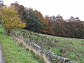 Autumn colours - geograph.org.uk - 1553765.jpg