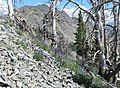 Avalanche Peak (15242948669).jpg