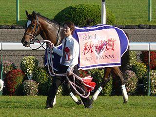 Aventura (horse) Japanese Thoroughbred racehorse