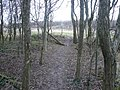 Avenue Washlands - Riverside Path leaves Woodland - geograph.org.uk - 676457.jpg