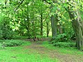 Avenue Wood, Temple Newsam - geograph.org.uk - 180251.jpg