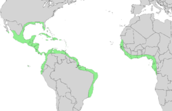 Distribution of Avicennia germinans