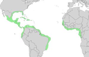 Avicennia germinans - Image: Avicennia germinans range map 3