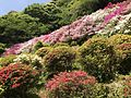 Azalea Valley in Mifuneyama Garden 5.jpg