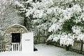 Backyard in the Snow (378874507).jpg