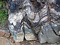 Banded iron-formation over basement rocks (Archean; Route 17 roadcut east of Bridget Lake, south of Wawa, Ontario, Canada) 36 (48270299621).jpg