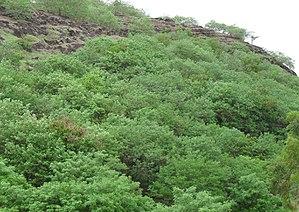 Baner-Pashan Biodiversity Park - Baner Hill in Monsoon