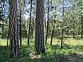 Battle Mountain Oregon forest (6028399842).jpg