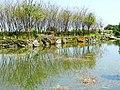 Bayan Terraced Field 八煙水中央 - panoramio.jpg