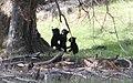 Bear Fight - panoramio.jpg