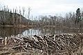 Beaver Dam (3513562411).jpg