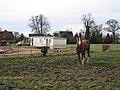 Bedlams End - geograph.org.uk - 1805112.jpg
