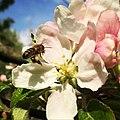 Bee (161835275).jpeg