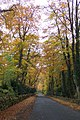 Beech lane in Autumn. - geograph.org.uk - 280066.jpg