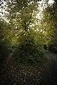 Belgium Steenmolenvoetweg (22569600690).jpg