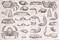 Bericht über die von Herrn Schiffscapitän Storm zu Atjeh, an den westlichen Küsten von Malakka, Borneo und Celebes sowie in der Java-See gesammelten Decapoden und Stomatopoden (1895) (14778515924).jpg