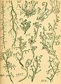 Bericht des Naturwissenschaftlichen Vereins für Schwaben und Neuburg (a.V.) in Augsburg (1908) (20371930191).jpg