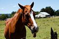Berry Horse (3132416308).jpg