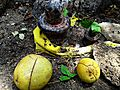 Bilva fruit and leaves to Shiva Linga.jpg