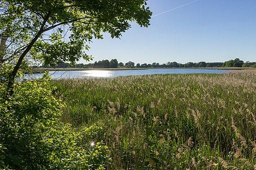Biosphärenreservat Oberlausitzer Heide- und Teichlandschaft - Roter Lug
