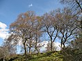 Birchwoods, Clune - geograph.org.uk - 799986.jpg