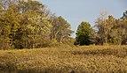 Blacklick Woods-Meadows in the Fall 2.jpg